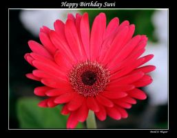 Happy Birthday Suvi by David-A-Wagner