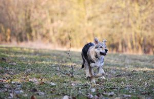 Chased by a Twig by Czertice
