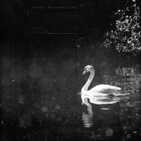 Ballade of the white swan by Suvetar