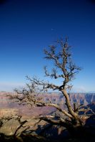 grand canyon: reaching up by giveitaway00