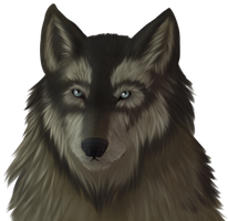Wolf's head: front view by Svetoch-the-Veris