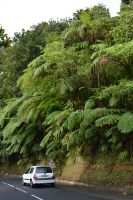 Ferns of 13 yards by A1Z2E3R