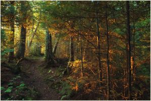 Anderson Point Trail II by BrianWolfe