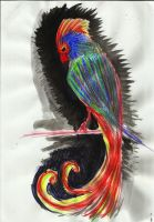 Mr.Parrot by concho