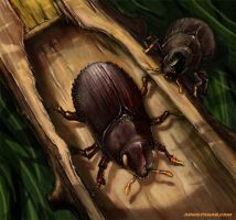 Pine Shoot Beetle by soul71