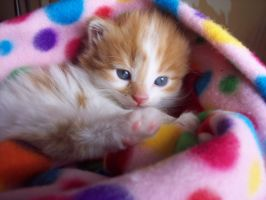 Wendy's Kitten by alaine842