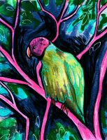 Plum Headed Parrot at Night by black-brd