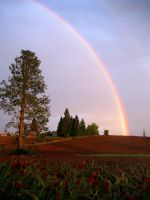 Crimson Clover Rainbow by cami-rox