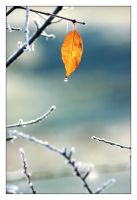 Study on leaves 4 by lawra