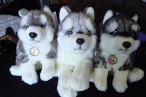 Uni-toys huskies and Teddy hermann husky by Vesperwolfy87