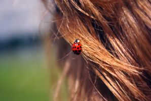bug in your hair by foodshelf