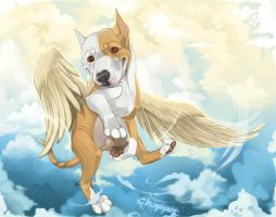 In the Clouds + Video! by GoPuppy
