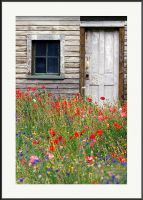 House of Flowers by yenom