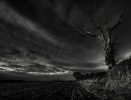 the tree by photo-earth