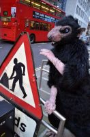 Pox: The Black Rat of London by CuriousCreatures