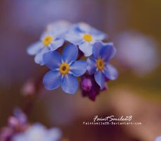 Forget Me Not by faintsmile28