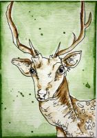 Deer ACEO by dyingrose24