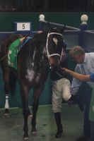 Saddling Paddock 07 01-20-14 by Darko-Stock