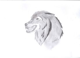 Snarling wolf by Helix-m