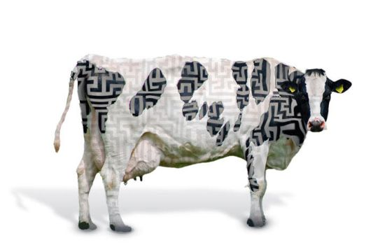 The a-Mazed cow by crysiss