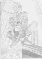 Spiderman by nereski