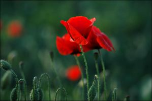 Red and green by koivu