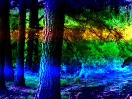 Rainbow Forest by wendy-bartley