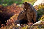 Baby Foxes - Moments Ago 5 by Witch-Dr-Tim