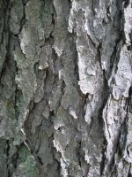 Tree Bark 4 by Salamander-Stock