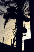 Withstand Iraqi Palm by Einas-A