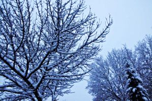 snowy branches II by ANDMAiYESi1986