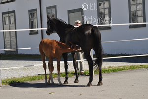 Foal Stock 15 by Champi-Stock