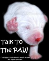 Dogo - Talk To The Paw by GD-litenin