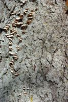 Natural Wood - bark by s-i-nthetic-dreams