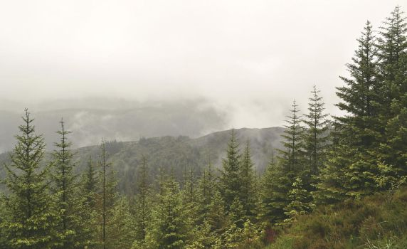 misty mountains by lady--snow