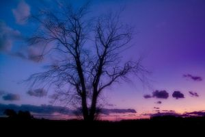 Tree in sunset by dok0001