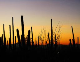 Saguaro Sunset by wonenownlee