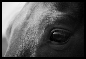 The horse's eye by Fezti