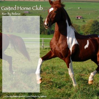 Gaited Horse Club Layout by LiveLoveLax21