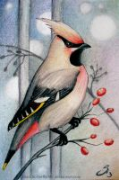Waxwing by Si3art