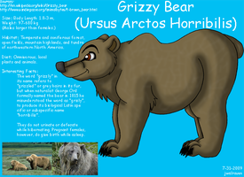 Grizzly Bear Info by JwalsShop