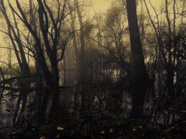 Foggy autumn by xNatje