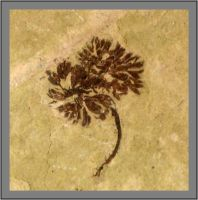 SR Fossil: Small Flowers by paleoichneum