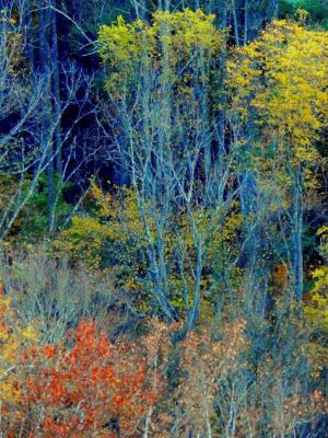 Shades of Autumn 2014.XVI by MadGardens