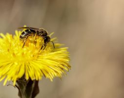 he doesn't suffer from hay fever... by clochartist-photo