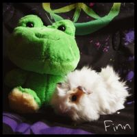 Finn the Guinea Pig with Joey the Frog! by allthatphanluv