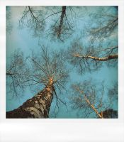 Trees and sky by wojtar