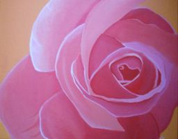 pink rose by Macca4ever