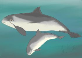 Baltic dolphins... by Tokitae