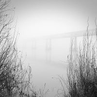 Foggy by laurentdudot